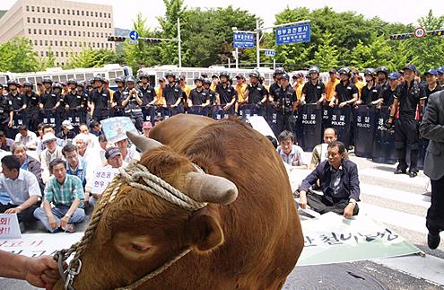 韩国农民抗议进口美国牛肉
