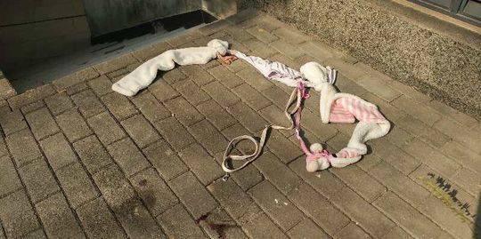 何某家楼下发现的结绳,何某辩称并非想把狗摔死而是要将其转移