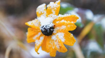 张家口赛区迎今秋初雪