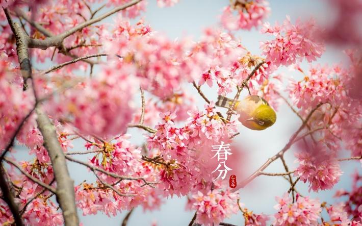 """感悟""""春分"""":春风十里之际 为收获季播下最好的种子"""