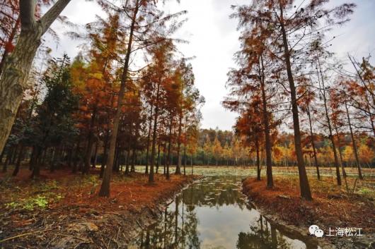 又有一座美美的免费郊野公园开放了,收好游园指南